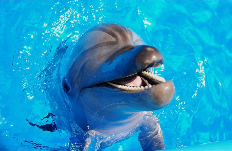 Дельфинарий «Немо» - дельфины-афалины