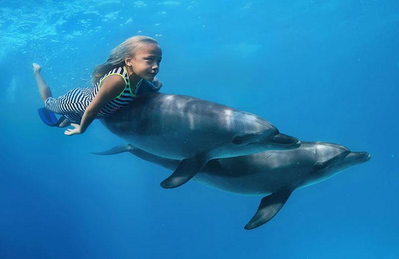 Дельфинотерапия в Бердянске