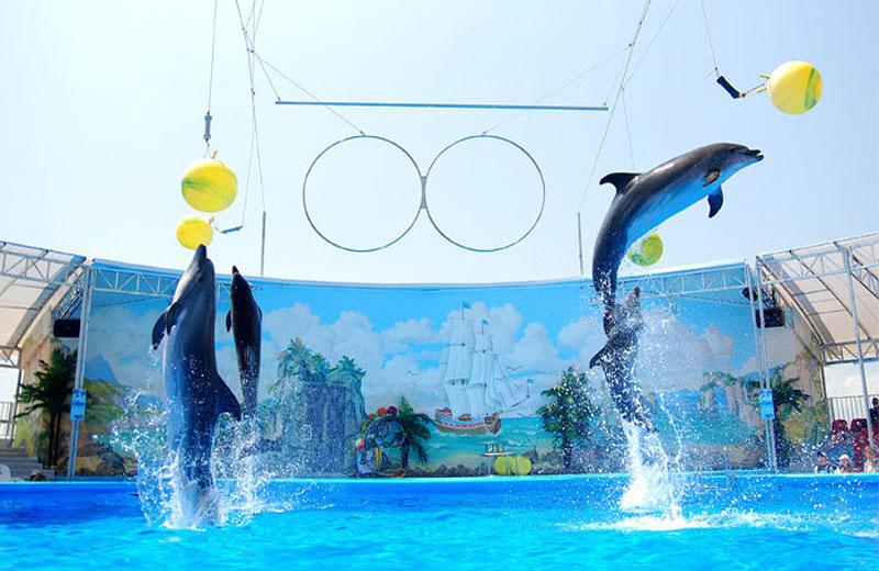 Бердянский дельфинарий «Немо»